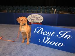 thanksgiving pet photos the national dog show my favorite thanksgiving tradition