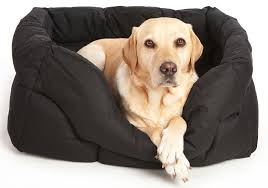 pets and leisure dog and cat beds mattresses cushions softee beds