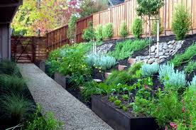 garden design ideas u2013 the 10 best trees for small gardens