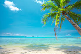 stunning beach wallpaper wall murals murals wallpaper sunshine palm paradise wall mural