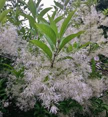 native michigan plants summer and fall flowering plants for michigan gardens