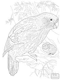 birds funny parrot on a branch parrots coloring pages coloring7 com