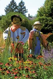 cute scarecrow wallpaper best 20 scarecrow garden ideas on pinterest scare crow