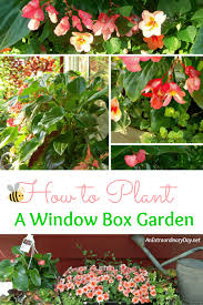 how to plant a window box garden tutorial u0026 planting tips an