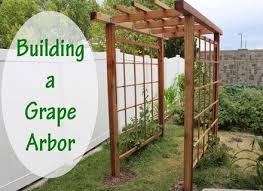backyard grape vine trellis pipe wire a backyard grape flickr