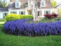 Bushes For Landscaping Purple Bushes For Landscaping Shrub Purple Landscaping Bushes