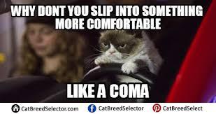 Grumpy Cat Coma Meme - grumpy cat memes cat breed selector