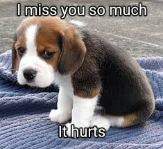 I Miss You Funny Meme - meme maker i miss you so much it hurts