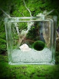moss ball pets terrarium kits marimo ball terrarium u2013 moss ball