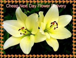 flowers delivered tomorrow flowers delivered tomorrow sympathy flowers delivery