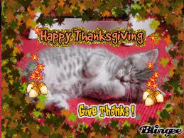 thanksgiving kitten picture 118790685 blingee