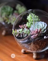 How To Make A Succulent Wall Garden by How To Make A Glass Globe Terrarium Diy Succulent Dish Garden