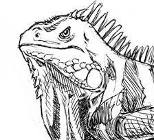 random sketches from kevin sprouls illustration ink rhythm