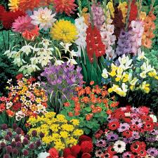Summer Garden Plants - best 25 summer bulbs ideas on pinterest summer bedding plants