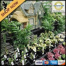 fairy garden plants fairy gardens fairy garden houses fairy