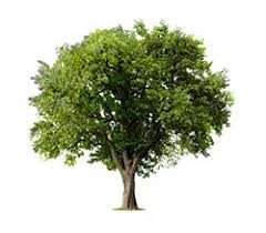 tree definition and meaning collins dictionary