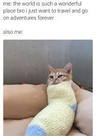 Depressed Cat Meme - depressed cat meme pic cat best of the funny meme