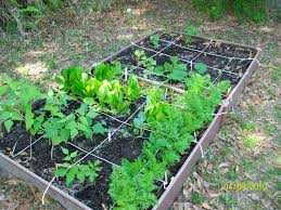 raised bed vegetable gardening in a small backyard 2045