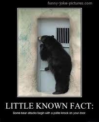 Bear Memes - bearably funny bear memes funny joke pictures