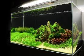Aquascape Inspiration Planted Tank Moonlight Mountain By Nandrean Silviu Marius