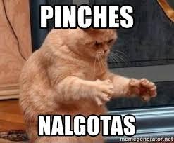 Pinches Memes - pinches nalgotas dat ass cat meme generator