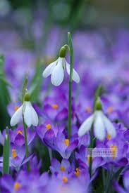 best 25 spring flowers ideas on pinterest spring flower