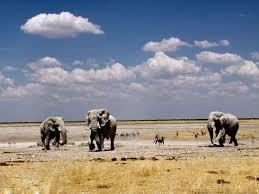 desktop cartoon elephants pictures wallpaper