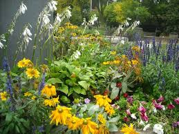 72 best non flowering outdoor plants images on outdoor