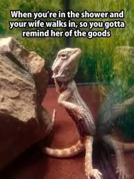 Reptile Memes - when you re in the shower and your wife walks in so you gotta