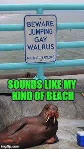 Walrus Meme - koo koo kachoo imgflip