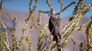 native desert plants ocotillo san diego zoo animals u0026 plants