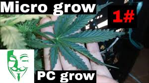 micro grow growing weed in a small place white berry 1 youtube