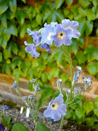 Scottish Rock Garden Forum by 18 June 2014 Kent Alpine Gardener U0027s Diary Gardeners U0027 Diaries