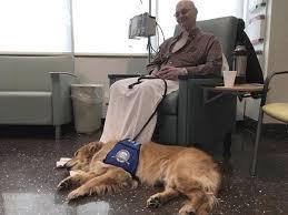 Comfort Golden Joplin Comfort Dog Handler Dies After Cancer Struggle Local News