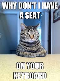 Keyboard Cat Meme - the chris hansen meme cat wants to talk 17 pics izismile com