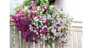 winterharte pflanzen balkon gartenwelt emsbüren winterharte pflanzen für den balkon