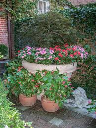 annuals 17 impatiens dragon wing begonias give color