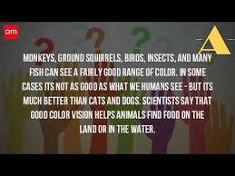 Are Dogs And Cats Color Blind Are All Animals Color Blind Youtube