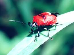 Virginia Bing Images by True Bug Wallpaper