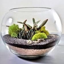 next stop pinterest terraria cacti and plants