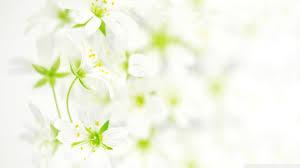 flower wallpaper white background desktop images high resolution