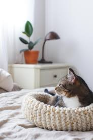 how to knit the purrfect cat bed oh honey