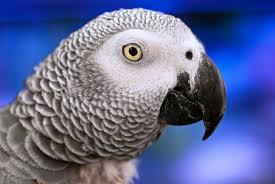 Parrot Decorations Home Top 5 Popular Large Parrots