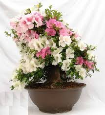 fresh indoor flowering plants uk 21122