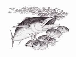 jason tison global flyfisher i first noticed jason tison u0027s