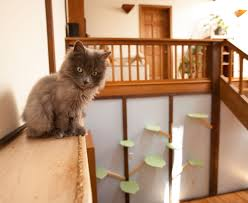 wall mounted cat stairs catification mountain pet products handmade wood cat trees