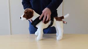 guide dog harness dog harness sizing guide petplanet co uk youtube