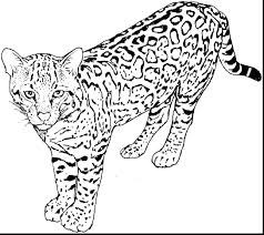 kitty cat coloring pages kitten free pets print baby
