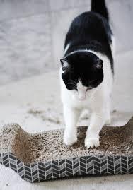 Cat Lounge Scratcher Caturday Favorite Cat Scratchers U2014 Cotton Cashmere Cat Hair