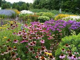 california natives plants native plant garden design design tips for photogenic gardens
